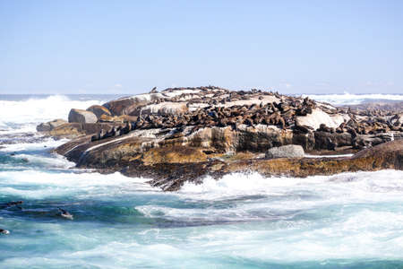 sunning: Thousands of seals sunning on Seal Island near the south western tip of South Africa