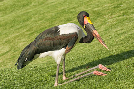 A crane kneeling down with its knee bent backwards