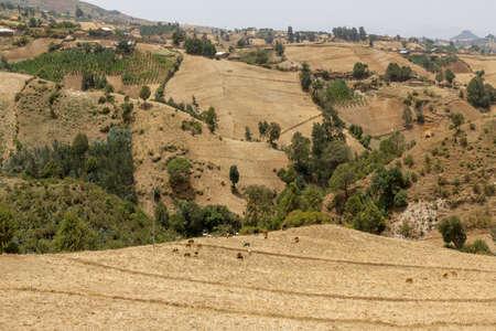The hilly landscapes of Ethiopia near Wonchi creator lake area. Banco de Imagens
