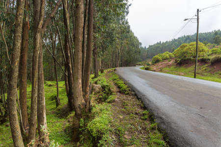 ababa: The road leading to the top of Mount Entoto just outside of Addis Ababa, Ethiopia