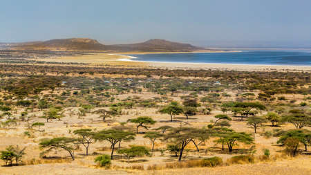 Acacia trees and sparse vegetation in the dry savannah grasslands in Abjatta-shalla national park, Ethiopia Banco de Imagens