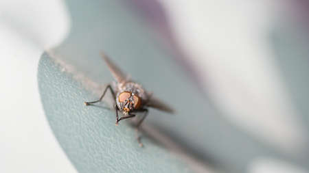 A close up shot of a medium sized common house fly