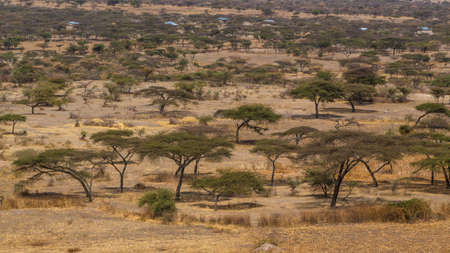 sparse: Acacia trees and sparse vegetation in the dry savannah grasslands in Abjatta-shalla national park, Ethiopia Stock Photo