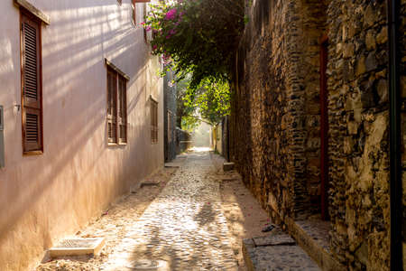 The morning sun shining through the overhanging plants in a narrow alley of Goree Island photo