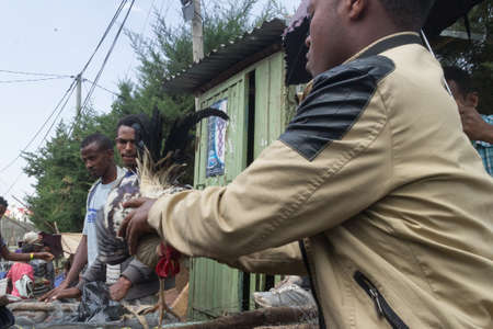 ababa: Addis Ababa: April 11: People bargain to buy roosters for the Easter Holidays at a local market on April 11, 2015 in Addis Ababa, Ethiopia Editorial