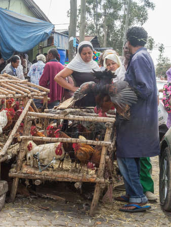 Addis Ababa: April 11: People bargain to buy roosters for the Easter Holidays at a local market on April 11, 2015 in Addis Ababa, Ethiopia Sajtókép