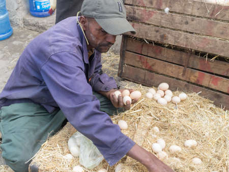 ababa: Addis Ababa: April 11: A man carefully inspects fresh farm eggs available for sale at a local market during Easter eve on April 11, 2015 in Addis Ababa, Ethiopia Editorial