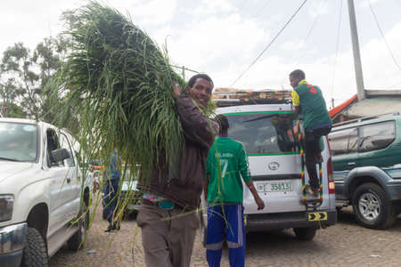ababa: Addis Ababa: April 11: A man brings freshly cut grass, used for decorating floors during the holidays, to local market during Easter eve on April 11, 2015 in Addis Ababa, Ethiopia