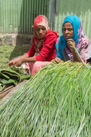 addis: Addis Ababa: April 11: Freshly cut grass which used for decorating floors during the holidays available for sale at a local market during Easter eve on April 11, 2015 in Addis Ababa, Ethiopia