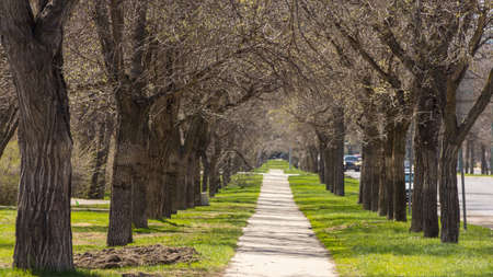 An empty pedestrian walkway in Downtown Regina, with trees and mowed grass on each side Stock Photo