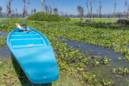 naivasha: Rental Motor boat along the shores of Naivasha lake covered with water hyacinth