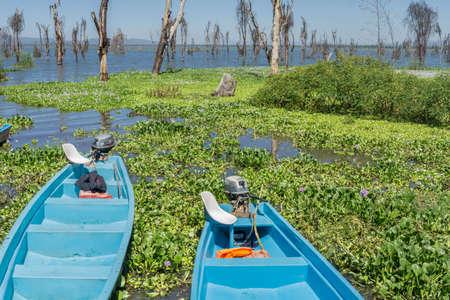 naivasha: Rental Motor boats along the shores of Naivasha lake covered with water hyacinth Stock Photo