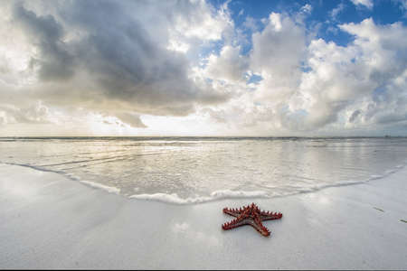 Starfish on the shores of the Indian Ocean in Mombasa, Kenya