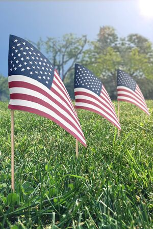 small United States flags in grass on a sunny day