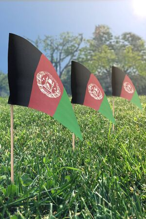 small flags in grass on a sunny day