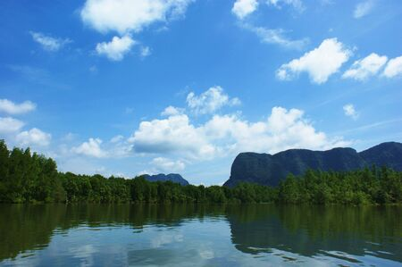 mangroves: Mangroves and the sky Stock Photo