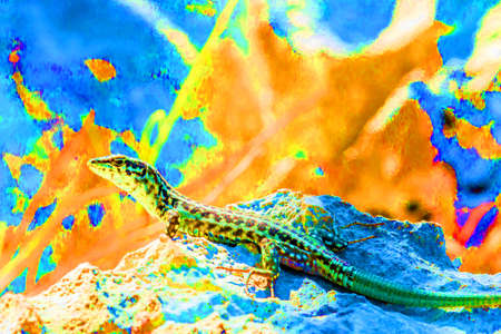 Psychedelic lizard abstract background Stock Photo