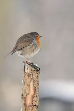 a european robin perched on a stump in the snow Imagens