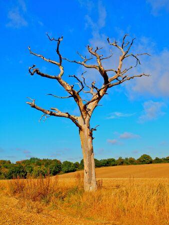 Tree Autumn Stock Photo - 5617400