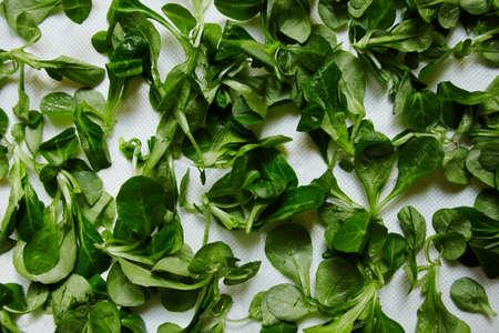 berros: fresco hojas ensalada de berros en el Libro Blanco