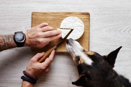 formagi: Tattoed hands cut camember sheese knife share dog