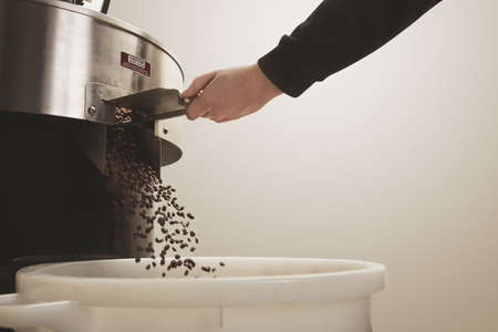 origin of man: Roaster hand opens hatch slider to allow cooled freshly baked aromatic coffee beans fall into plastc basket from cooling cylinder of professional roasting machine Motion blur on beans LANG_EVOIMAGES