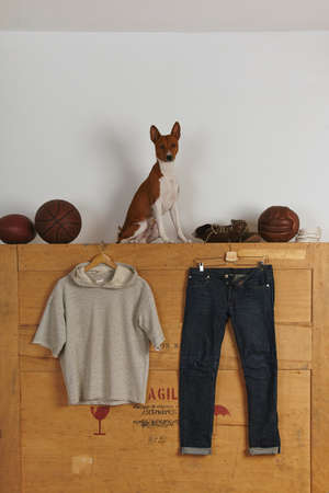 sleeveless hoodie: Blank basic sleeveless hoodie presented near japanese selvedge denim on wooden background Vintage rugby, basketball and football on top and sitting basenji dog LANG_EVOIMAGES