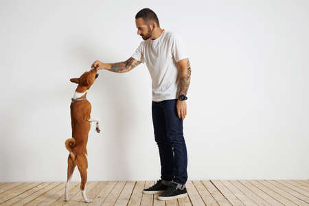 rant: Muscular white man with tatooed arms and dark hair and beard wearing white t-shirt and jeans offers brown and white basenji dog standing on its rear paws a treat in a room with white walls and light wooden floor. LANG_EVOIMAGES