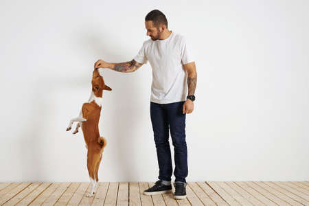 A young brown and white basenji dog is standing very tall on its rear paws as its bearded and tattooed owner motivates it by offering it a treat high up in the air. Stock Photo