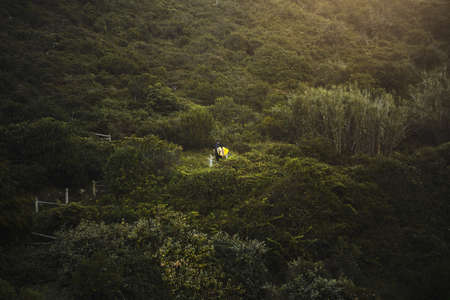 mountin: Surfer with his surfboard in hand ascending on stairs on top of mountin to his camping place after surfing in early morning Green bushes around