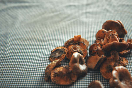 Close up shot of tiny fresh forest mushrooms on a table covered with a traditional countryside tablecloth LANG_EVOIMAGES