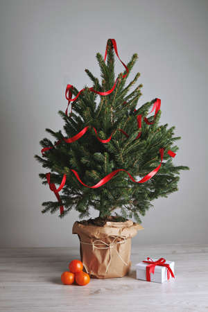 Bushy green scandinavian Christmas tree decorated with a shiny red ribbon with a small present and a few bright oranges on light gray background and wooden floor. Stock Photo