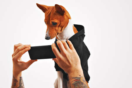 Serious brown and white basenji dog in black sweatshirt watches a movie on a smartphone held by mans hands on white background LANG_EVOIMAGES