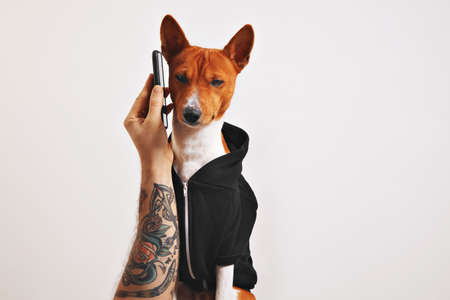 Man with tattooed arm holds up a smartphone to the ear of a basenji dog in black hoodie isolated on black LANG_EVOIMAGES