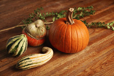 Mixed different pumpkins isolated on wooden table in center next to green branch of eucalyptus tree LANG_EVOIMAGES