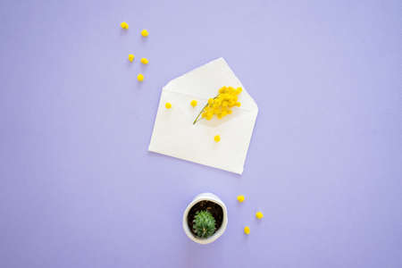 Yellow mimosa flower sticks out of handcrafted little white envelope with mini cactus isolated on lilac background, top view.