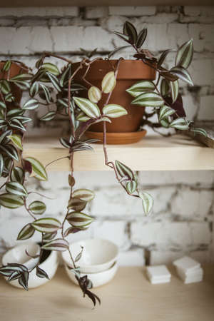 Beautiful plant in ceramic pot on wooden shelf with white brick wall on background in workshop