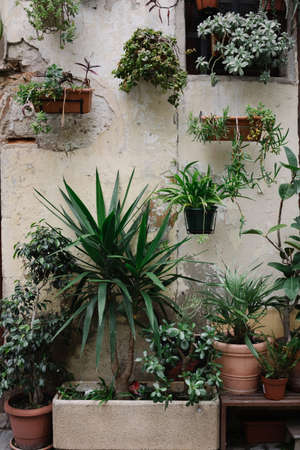 Front view of old house with a lot of plants in pots on facade background.