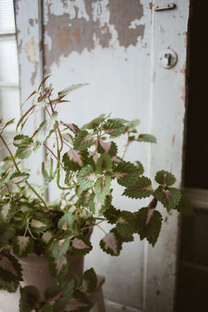 Green plant in clay pot on wooden stand in front of old wooden door in beautiful rustic studio, close up view