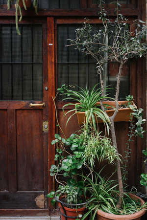 Front close up view on old wooden dark brown rustic door with a lot of plants in pots. Standard-Bild