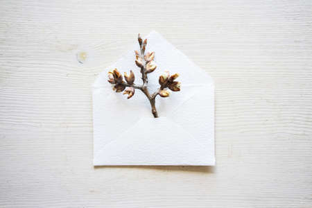 Spring twig peeps out of handcrafted little simple white envelope made of design cotton paper on wooden table background, top view