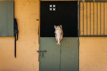 atmosphere: Beige and white pony looks throw window of stable with green door and yellow wall on ranch