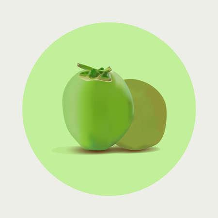 Realistic coconut green vector illustration