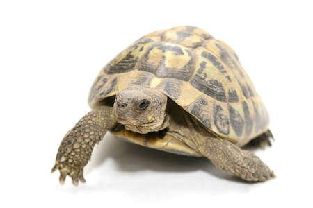paciencia: una tortuga que camina