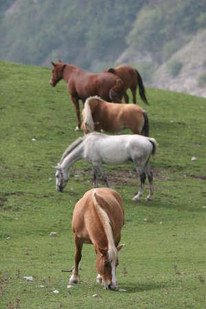 racehorses: Horses