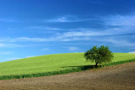 Grain field   Stock Photo - 6068597