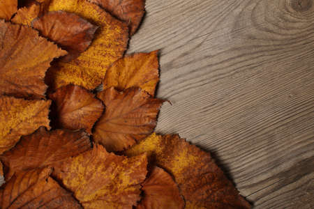 Autumn Leaves frame over wooden background Stock Photo