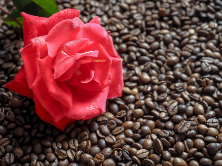 Blooming red rose on the surface of coffee bean.