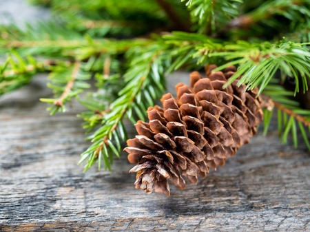old desk: Christmas fir tree with decoration on a wooden board. Stock Photo