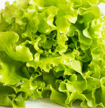 Green fresh lettuce leaves on white background. Copy space